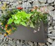 Abo Mein Schöner Garten Luxus Hashtag Pflanzbehälter Na Twitteru