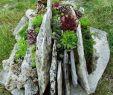 Alpenveilchen Im Garten Elegant 50 Einzigartige Steingarten Ideen Für Den Hinterhof