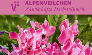 29 Luxus Alpenveilchen Im Garten Genial