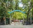 Amphitheater Englischer Garten Reizend 28 Frisch Biergarten Im Englischen Garten Luxus