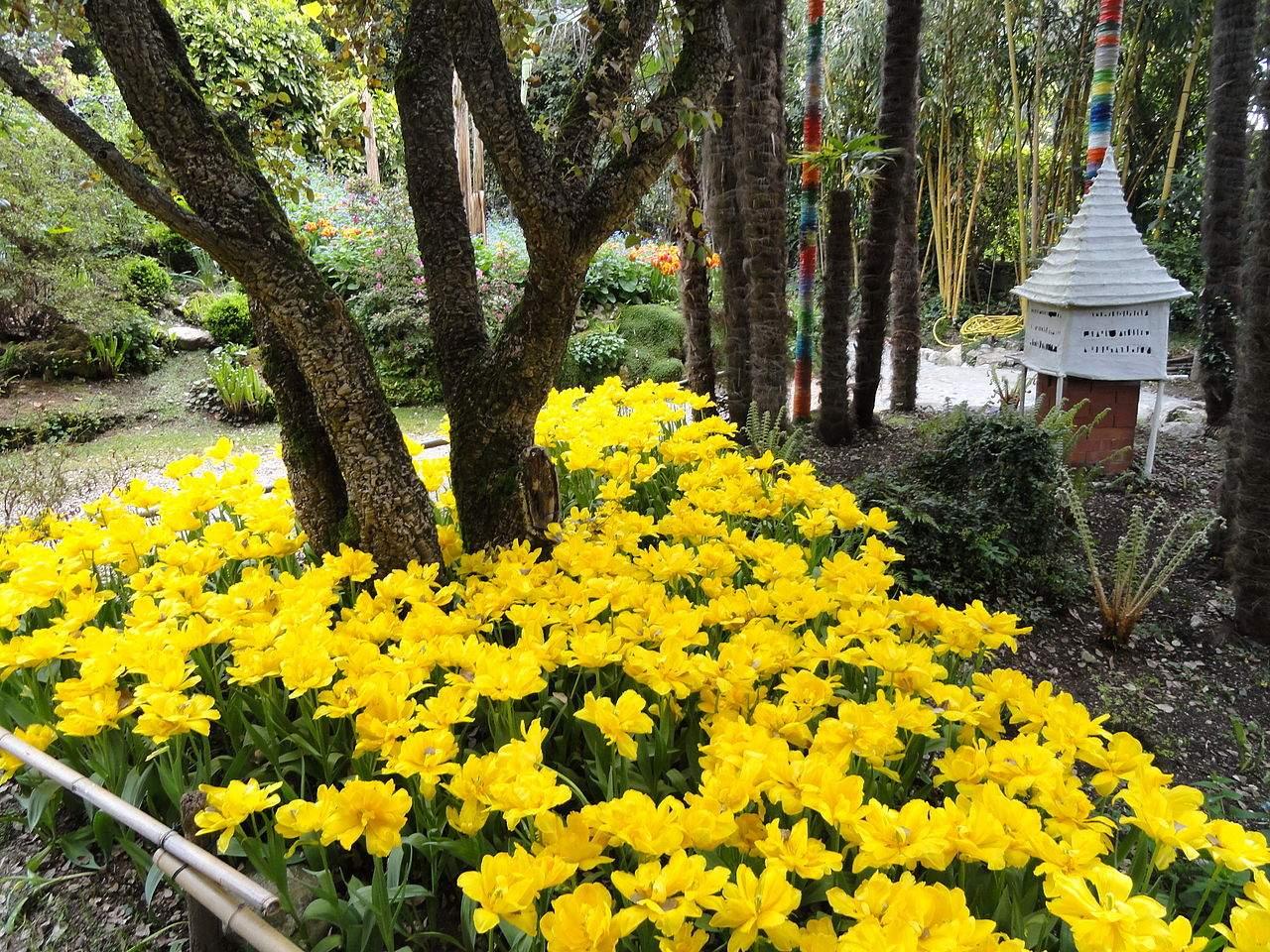 1280px Giardino Botanico Fondazione André Heller DSC JPG