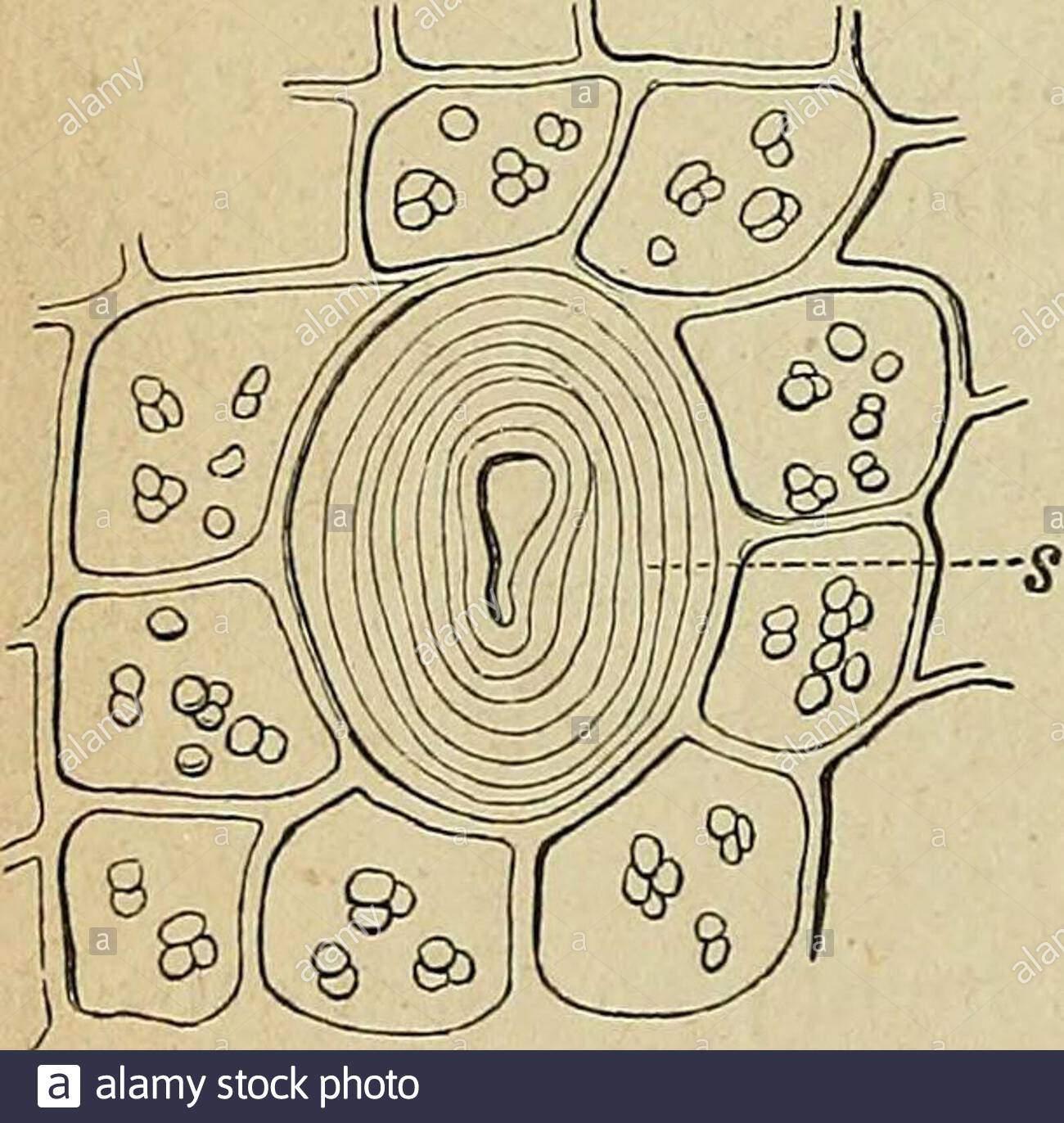 nahrungs und genussmittel aus dem pflanzenreiche anleitung zum richtigen erkennen und prfen der wichtigsten im handel vorkommenden nahrungsmittel genussmittel und gewrze mit hilfe des mikroskops zum allgemeinen sowie zum speciellen gebrauche fr apotheker droguisten sanittsbeamte industrielle etc 16 allgemeines ber den bau als eine gleichfrmige zellenhhlimg ausfllende klumpigemasse schon in kaltem wasser sofort zerfliesst zurmikrochemischen nachweisung des zuckers be nt man sichder trommerschen probe das betreffende object z b feineschnitte werden in ein uh 2AJA01P