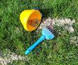 Asia Garten Zumwalde Elegant Unsere Tipps Zum Rasen Sanden Rasenspecht