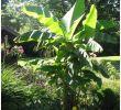 Ausbildung Garten Und Landschaftsbau Schön tom Garten