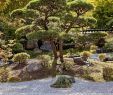 Bad Langensalza Japanischer Garten Neu Deutsch Japanisch Stockfotos & Deutsch Japanisch Bilder Alamy
