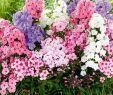 Baldur Garten Versand Einzigartig Preis Schuhwerk Verschiedene Arten Von Pflanzenversand