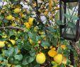 Bananenbaum Im Garten Neu 571 Best Garten Images