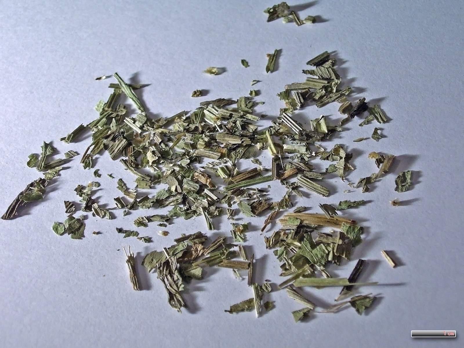 Plantaginis lanceolatae herba