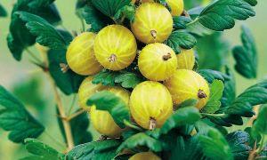 36 Einzigartig Beeren Garten Luxus