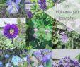 Beet Garten Frisch 9 & Mehr Blaue Stauden – Blaues Wunder Im Garten Auf 850 Hm