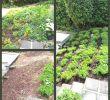 Beton Deko Garten Luxus Gartendeko Selber Machen — Temobardz Home Blog