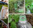 Bewässerung Garten Selber Bauen Elegant Tröpfchenbewässerung Mit System Bewässern