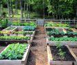 Bewässerung Garten Selber Bauen Frisch Hochbeet Selber Bauen Und Bepflanzen Vorteile