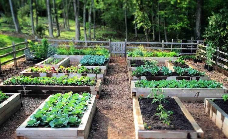 hochbeet selber bauen bepflanzen tipps