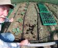 Bewässerung Garten Selber Bauen Inspirierend Gewächshaus Bewässerung Selber Bauen