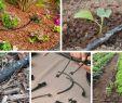 Bewässerung Garten Selber Bauen Neu Tröpfchenbewässerung Mit System Bewässern