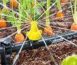 Bewässerungsanlage Garten Reizend Automatische Gartenbewässerung Tipps Für Planung Und