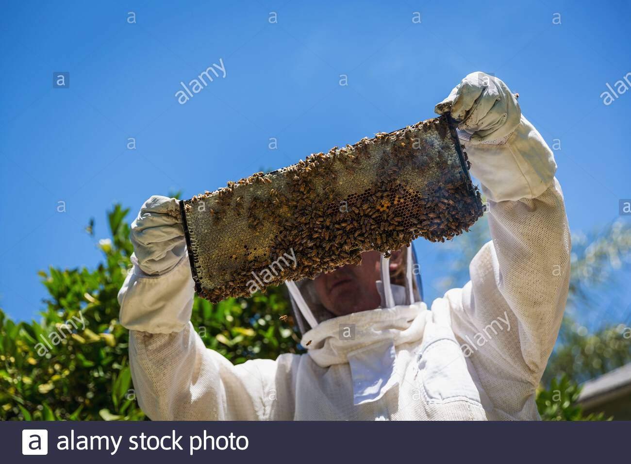 imker mit einem honig frame in bienen bedeckt 2ae0c7d