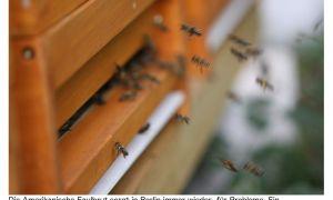 32 Reizend Bienen Im Garten Halten Einzigartig