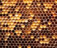 Bienen Im Garten Halten Neu Download the Honey Honey B Wallpaper Honey Honey B