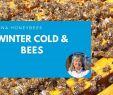 Bienen Im Garten Halten Schön Winter Cold and Honey Bees Beekeeping In Winter is Not Easy