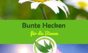 30 Das Beste Von Bienen Im Garten Schön
