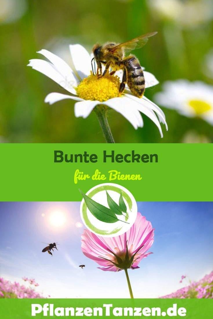 Bienen Im Garten Schön 】bienenfreundlicher Garten