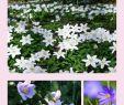 Bienenfreundlicher Garten Einzigartig Anemonen In Vase Und Garten Buschwindröschen Und Ihre
