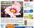 Bienenfreundlicher Garten Luxus Kw 13 2017 by Wochenanzeiger Me N Gmbh issuu