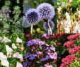 Bienenfreundlicher Garten Reizend Stauden Set Hot Summer