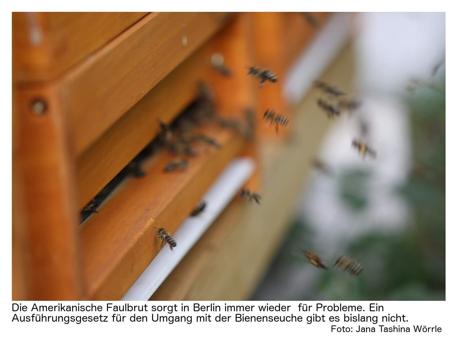 Bienenstock Im Garten Das Beste Von Amerikanische Faulbrut Wenn Fehlende Vorschriften Zum