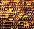 Bienenstock Im Garten Frisch Download the Honey Honey B Wallpaper Honey Honey B