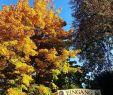 Biergarten Englischer Garten Das Beste Von Golden October 🍂🍁💠Will Always Be My Favourite Month Of