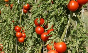36 Neu Bio Garten Frisch