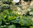 Bio Garten Elegant Pflegeleichten Garten Mit üppigen Beeten Anlegen Anlegen