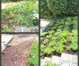 Bio Garten Frisch Gartendeko Selber Machen — Temobardz Home Blog