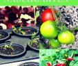 Bio Garten Luxus Probiere Regionale Obst Und Gemüsesorten Und Exoten Im