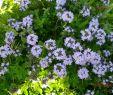 Blühender Garten Das Beste Von Arbeitslos Kein Geld Auf Dem Weg In Freiheit Mai 2016