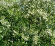 Blühender Garten Einzigartig Arbeitslos Kein Geld Auf Dem Weg In Freiheit Mai 2018