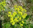 Blühender Garten Elegant Arbeitslos Kein Geld Auf Dem Weg In Freiheit Mai 2016