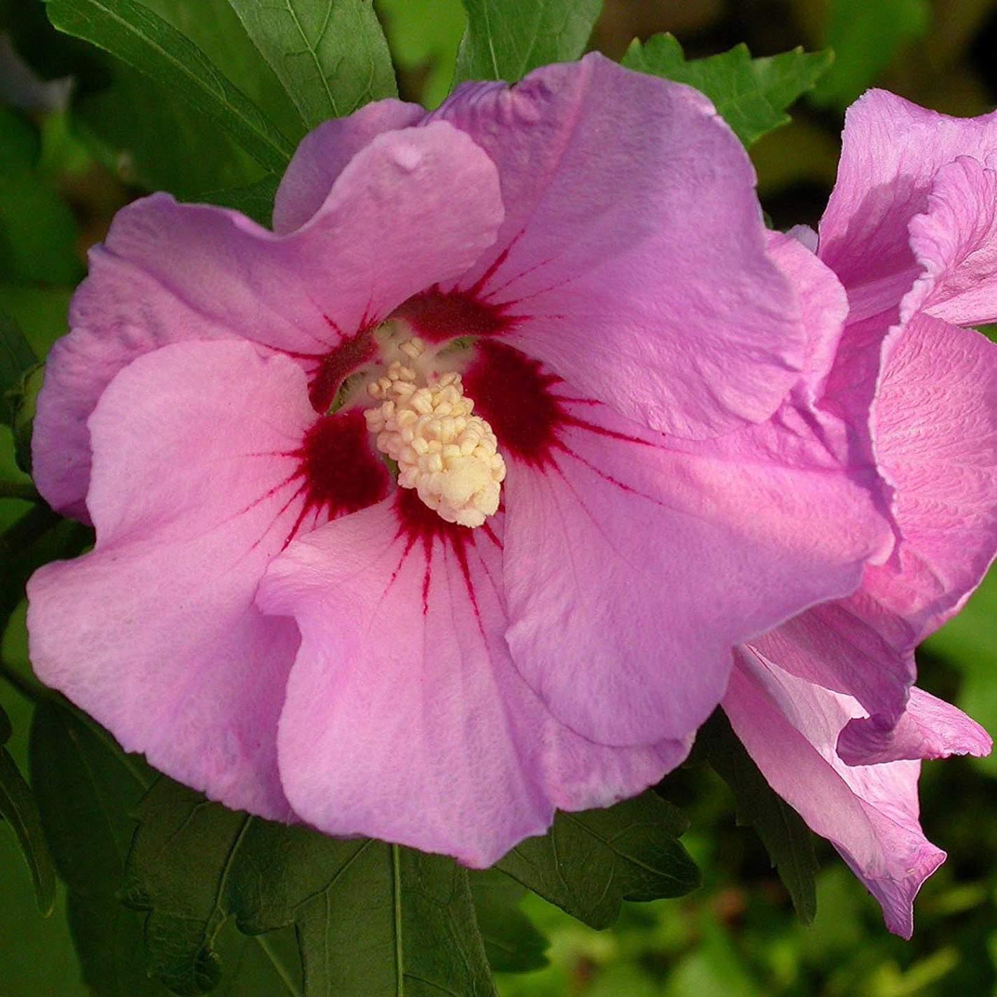 Blühender Garten Frisch Blühende Kletterpflanzen Winterhart — Temobardz Home Blog