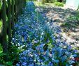 Blühender Garten Genial Arbeitslos Kein Geld Auf Dem Weg In Freiheit Mai 2016