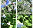 Blühender Garten Luxus Blühende Kletterpflanzen Winterhart — Temobardz Home Blog