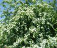 Blühender Garten Reizend Arbeitslos Kein Geld Auf Dem Weg In Freiheit Mai 2016