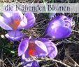 Blühender Garten Reizend Luxus Was Lange Währt Wird Endlich Gut Zitat