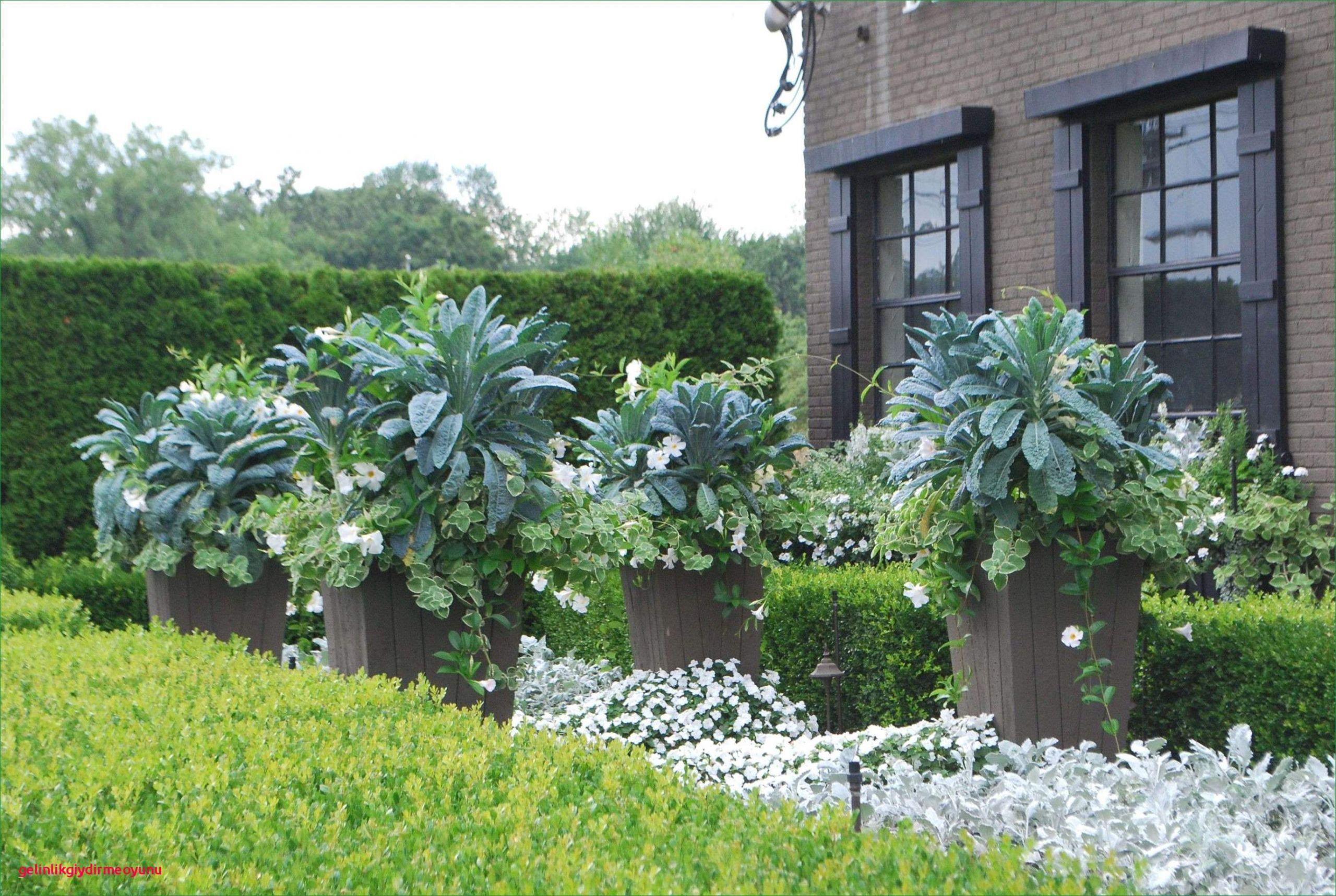 Blühender Garten Schön Blühende Kletterpflanzen Winterhart — Temobardz Home Blog