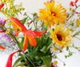 Blumen Im Garten Genial Meine Schwiegermutter Hat Schönsten Blumen Im Garten