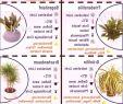 Blumenwiese Im Garten Das Beste Von Garten Landschaftsbau Garten Garten Zimmerpflanzen Fr
