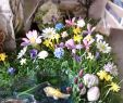 Blumenwiese Im Garten Das Beste Von Puppenhaus Garten Blumenwiese Hügel Blumen Doll