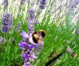 Blumenwiese Im Garten Einzigartig 🐝🌺 Hummel Natur Hummelsport Natur Insekten Garten